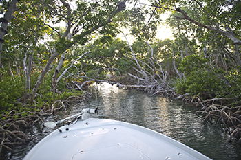Backcountry mangrove islands on an Eco tour