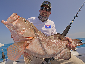 Large Red grouper caught in the Dry Tortugas Ft Jefferson National Park